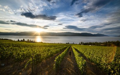 Better understand VQA wines