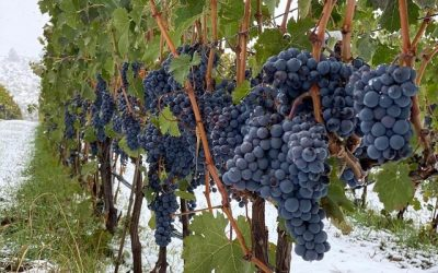 Natural wine grows in popularity